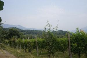 Wine Cellar Manerba