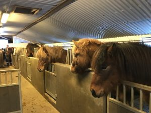 Riding Tours South Iceland, Riding, Horse Riding, Icelandic Horse
